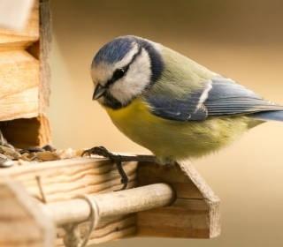 Vogel holt sich Futter an einem Futterhaus