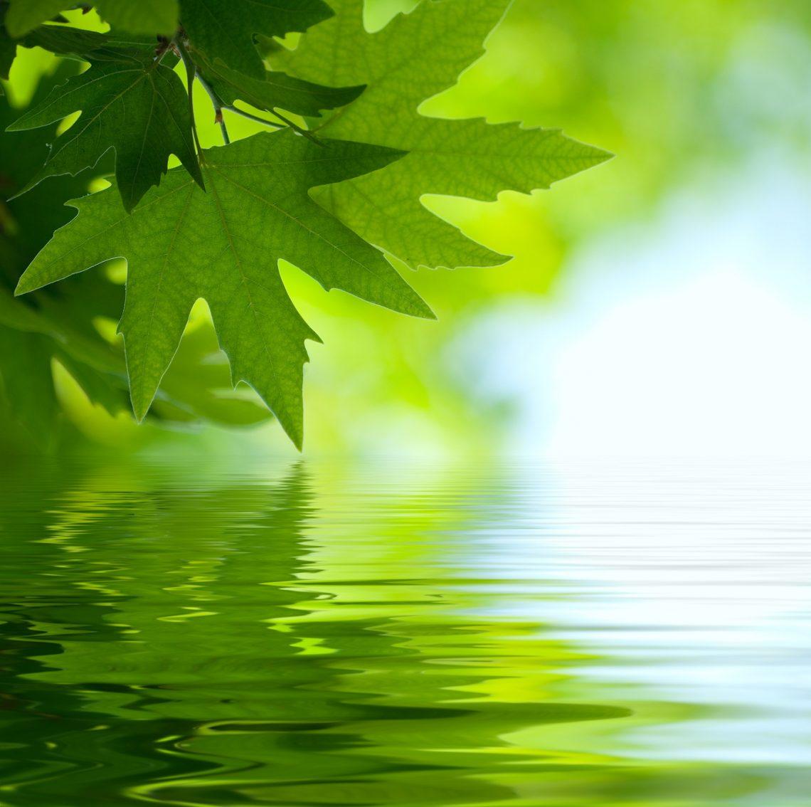 Grünes Blatt über Wasser