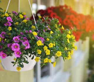 Bunte Blumen hängen an einem Haus.