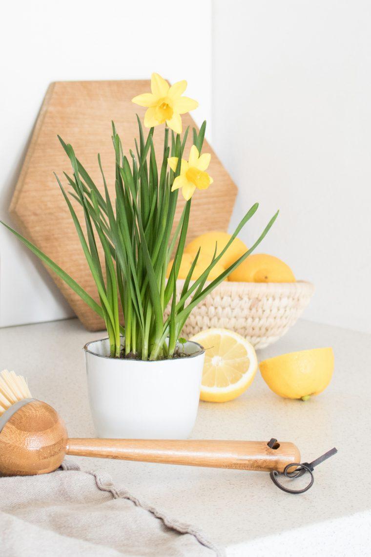 Bildcollage mit Osterglocken und Zitronen.