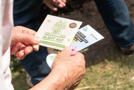 Packung mit Samen für Wildblumenwiese für den Klimaschutz
