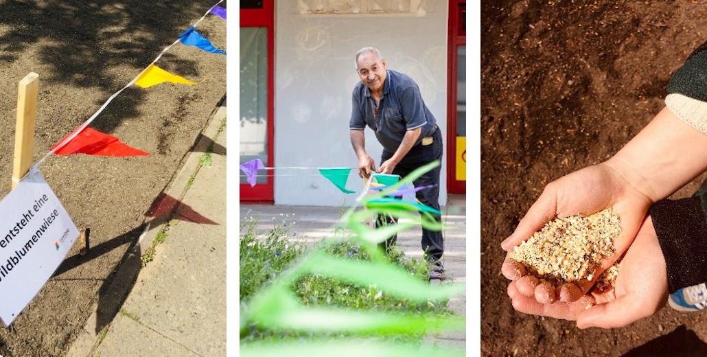 Bilder, die die Entwicklung der Wildblumenwiese am Emstaler Platz für den Klimaschutz zeigen