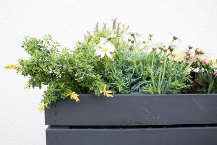 Urban Gardening fertiges Hochbeet.