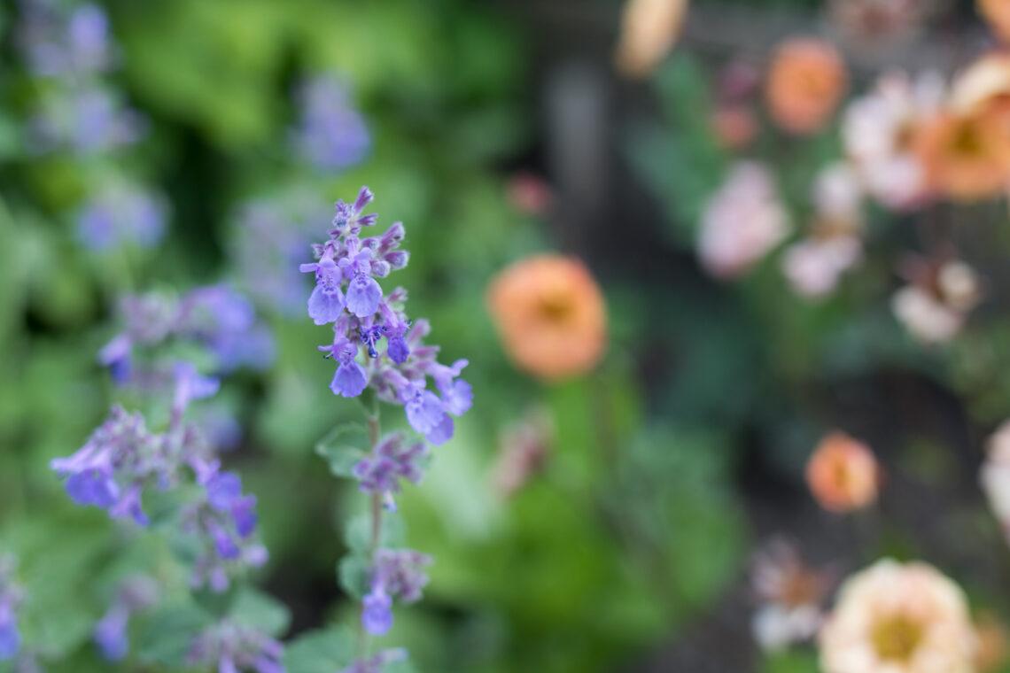 Das DIY Insektenhotel aus dem Natirmaterial Ton eignet sich prima als Nisthilfe für Wildbienen und andere Insekten. Am besten kombiniert mit bienenfreundlichen Pflanzen.