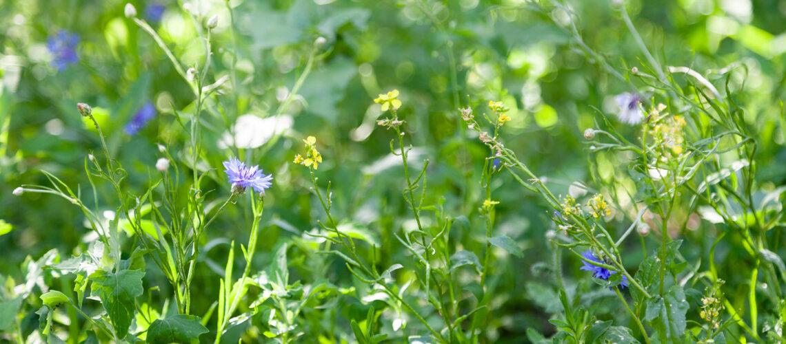 grüne Blumenwiese
